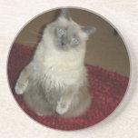 Situps del gato posavasos personalizados