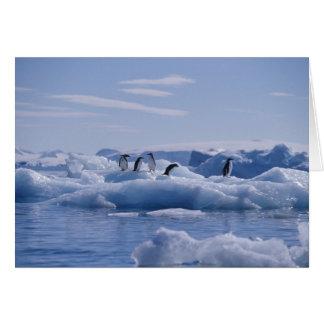 Six Adelie Penguins Pygoscelis adeliae) on an Card