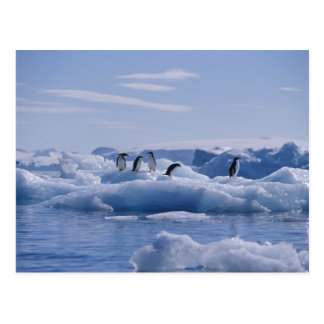 Six Adelie Penguins Pygoscelis adeliae) on an Postcard