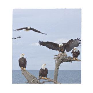 Six Bald Eagles (Haliaeetus leucocephalus) Note Pad