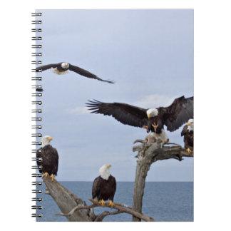 Six Bald Eagles (Haliaeetus leucocephalus) Notebook