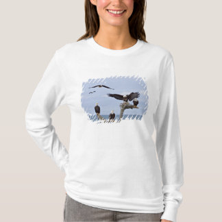 Six Bald Eagles (Haliaeetus leucocephalus) T-Shirt