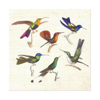Six Beautiful Vintage Hummingbirds Canvas Print