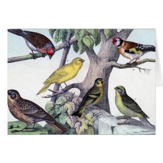 Six colorful birds  vintage post card art.