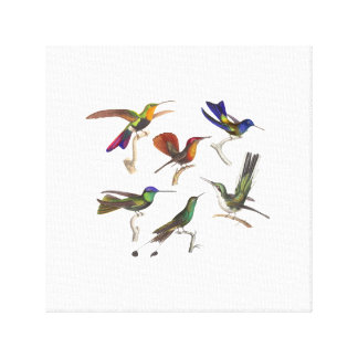 Six Colorful Hummingbirds Stretched Canvas Prints