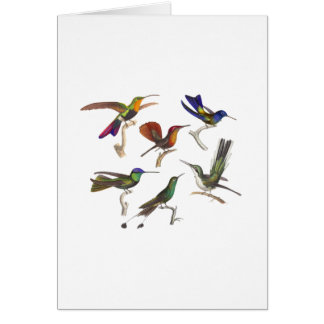 Six Colorful Hummingbirds Card