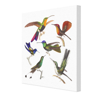 Six Colorful Hummingbirds from Antique Prints