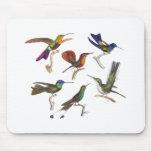 Six Colorful Hummingbirds Mouse Pad