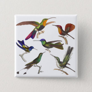 Six Different Hummingbirds - Rene Primevere Lesson Button