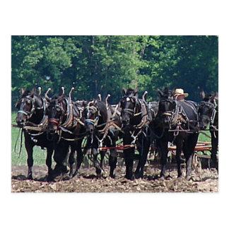Six-Horse-Team Postcard