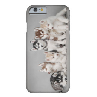 Six huskies barely there iPhone 6 case
