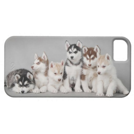 Six huskies iPhone SE/5/5s case