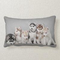 Six huskies lumbar pillow