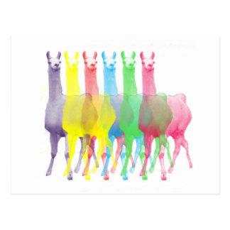 six lamas in six llama colors postcards