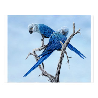 Six Macaw gifts for the Parrot lover Postcard