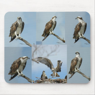 Six Osprey bird Photos Mousepad