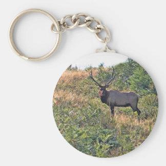 Six Point Elk Photo Keychain