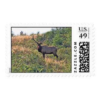 Six Point Elk Photo Postage Stamp