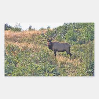 Six Point Elk Photo Rectangular Sticker