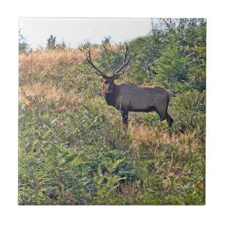 Six Point Elk Photo Tile