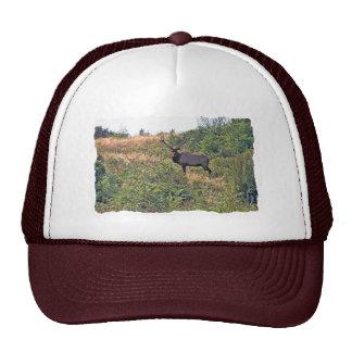 Six Point Elk Photo Trucker Hat