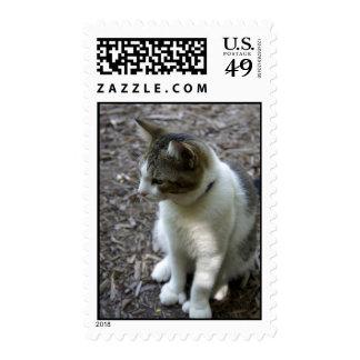 Six Toe Stamp