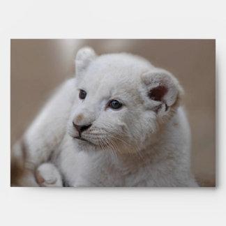 Six week old white baby lion cub envelope