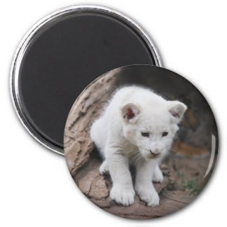 Six week old white baby lion cub magnet