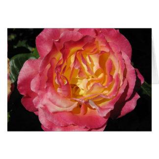 Sixth Chakra Rose Meditation Card