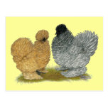 Sizzle Chickens Postcard