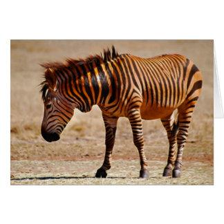 Sizzling zebra card