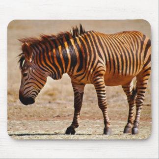 Sizzling zebra mouse pad