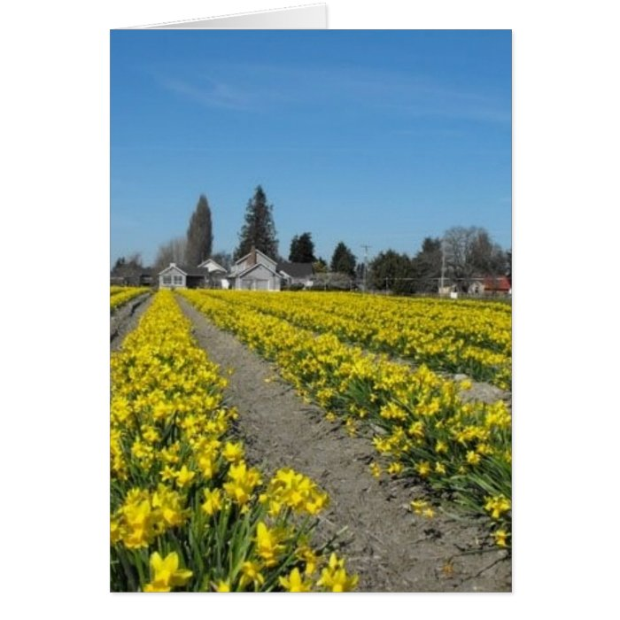 skagit valley tulips 2 card