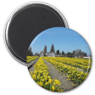 skagit valley tulips 2 magnet