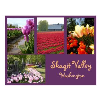 Skagit Valley Tulips 2 Postcard
