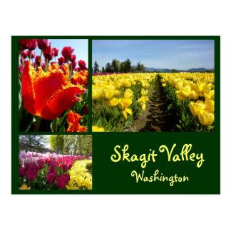 Skagit Valley Tulips 3 Postcard
