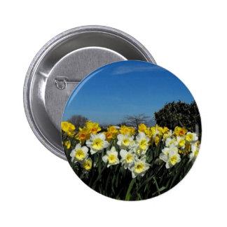 skagit valley tulips 6 2 inch round button