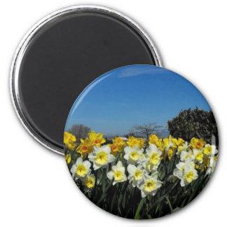 skagit valley tulips 6 2 inch round magnet