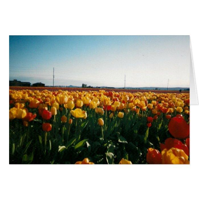 skagit valley tulips card