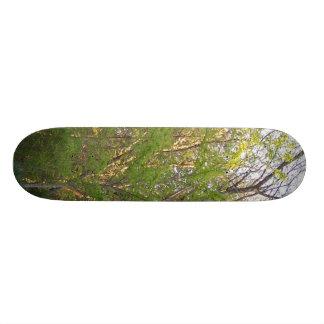 Skate in Nature Skateboard Deck