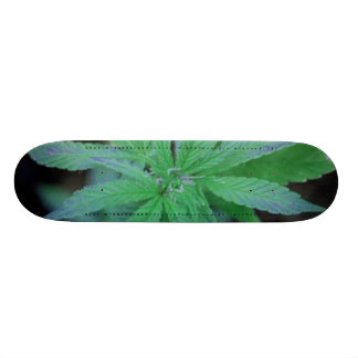 Skate-o-Rama Skate Boards