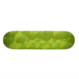Skateboard - Kiwi