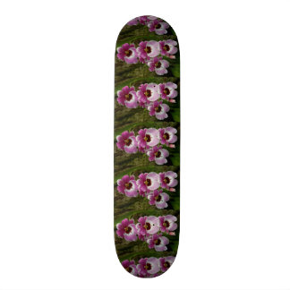 Skateboard - Pansy Orchid