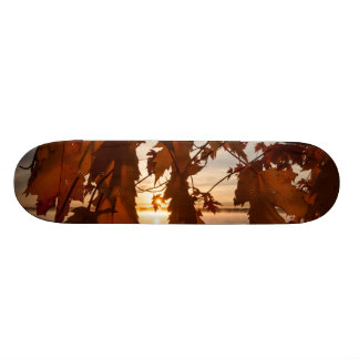 Skateboard sheets of maple