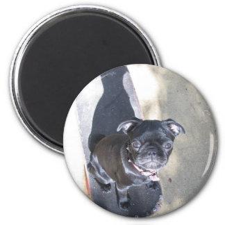 Skateboarding Pug Magnet
