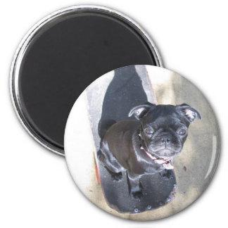 Skateboarding Pug Magnet (Photo)