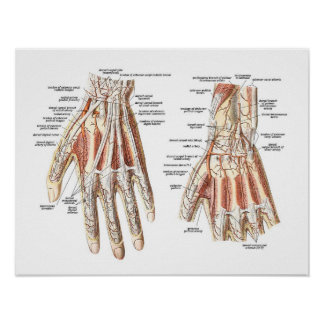 Skeletal Anatomy of the Hand Poster