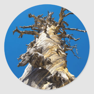 Skeletal Tree with Blue Sky Classic Round Sticker