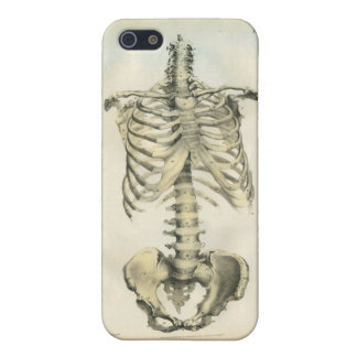 Skeleton Anatomical Art Cover For iPhone 5