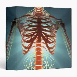 Skeleton and Nerves Binder